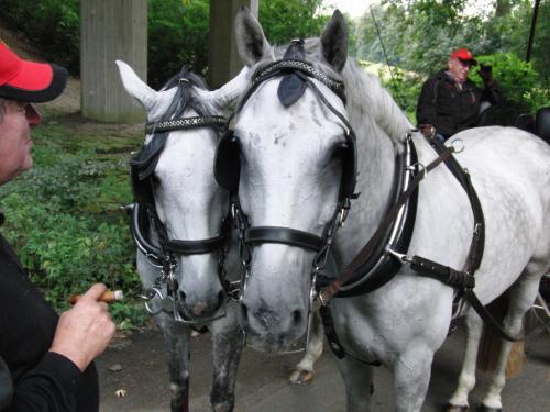 Kutschfahrt 2009 (21) (1)