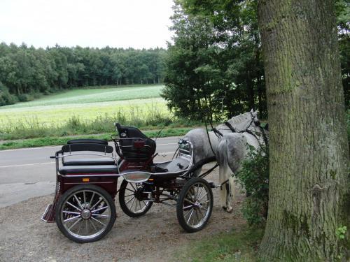 Kutschfahrt 2009 (37) (1)